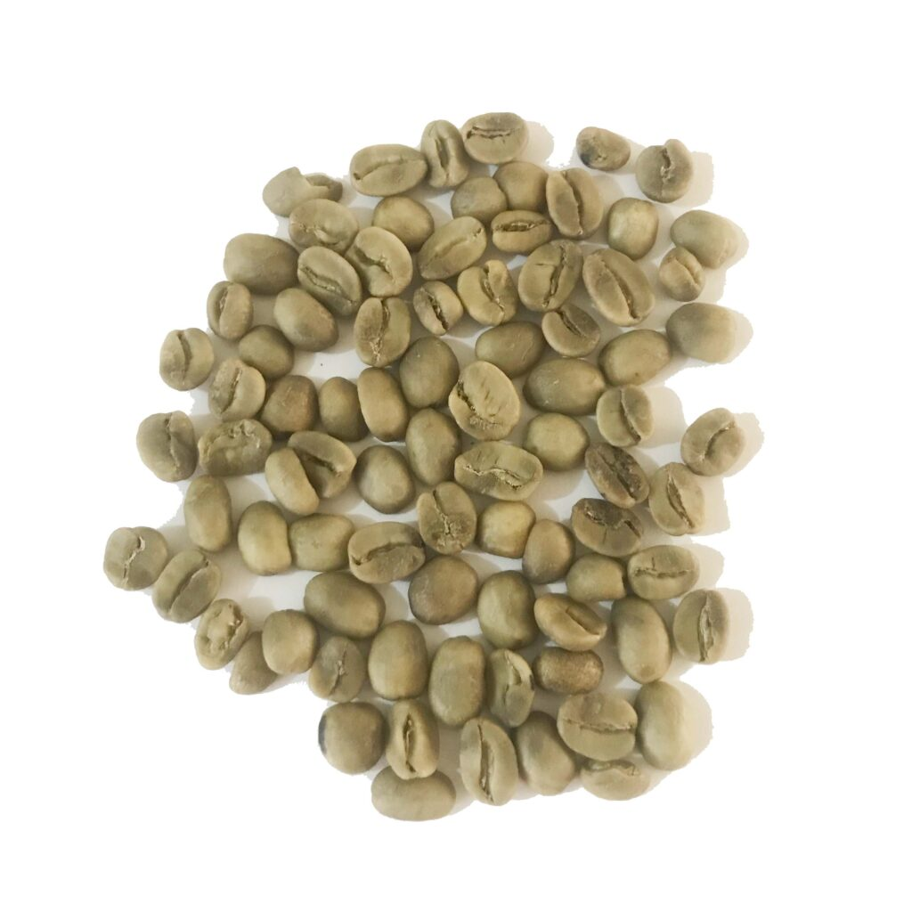 Green Coffee Beans - Sashamore